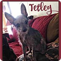 Adopt A Pet :: Tetley - Pensacola, FL