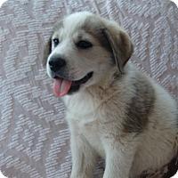 Adopt A Pet :: Max - Huntsville, AL