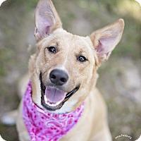 Adopt A Pet :: Sweetie - Kingwood, TX