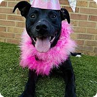 Adopt A Pet :: Lilo - Germantown, TN