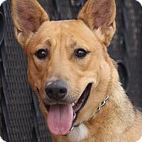 Adopt A Pet :: Jessie von Jessen - Los Angeles, CA