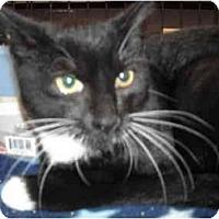 Adopt A Pet :: Sassy - Riverside, RI