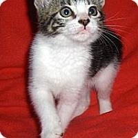 Adopt A Pet :: Gatsby - Richmond, VA