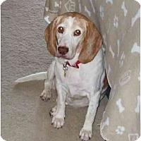 Adopt A Pet :: Lucy IM Home - Phoenix, AZ