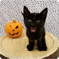 Adopt A Pet :: Mogley - Warren, MI