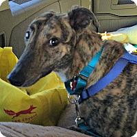 Adopt A Pet :: Sprocket - Oklahoma City, OK