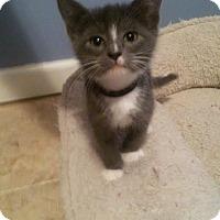Adopt A Pet :: Bluegrass - McDonough, GA