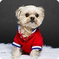 Adopt A Pet :: Gizmo II - Baton Rouge, LA