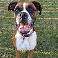 Adopt A Pet :: Hashtag - Hurst, TX