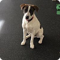 Adopt A Pet :: Zeke - Battle Creek, MI