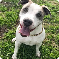 Adopt A Pet :: Melanie - Brea, CA