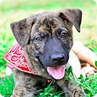 Adopt A Pet :: Sabina - San Ramon, CA