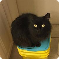 Adopt A Pet :: Sylvie - Davison, MI