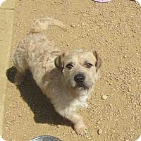 Adopt A Pet :: TOTO - Plano, TX