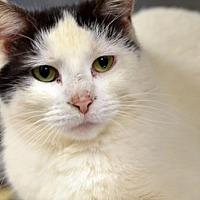 Adopt A Pet :: Ireland170535 - Atlanta, GA