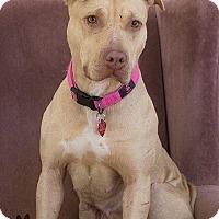 Adopt A Pet :: Scarlett - Acushnet, MA