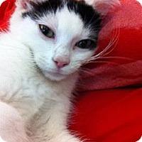 Adopt A Pet :: Troy - Riverhead, NY