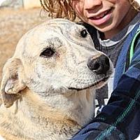 Adopt A Pet :: Smore - Kittery, ME