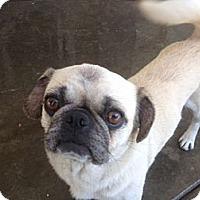 Adopt A Pet :: Zoey - Anaheim, CA