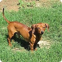 Adopt A Pet :: Zan - Kingwood, TX