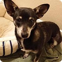 Adopt A Pet :: Jenny - Wheatland, WY