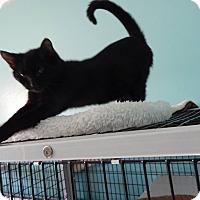 Adopt A Pet :: Blackie - Cuero, TX