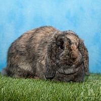 Adopt A Pet :: Mosaic - Pflugerville, TX