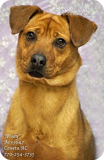 Black Mouth Cur Mix Dog for adoption in Newnan City, Georgia - Rudy