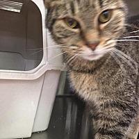 Adopt A Pet :: EBENEZER - Hopkinsville, KY