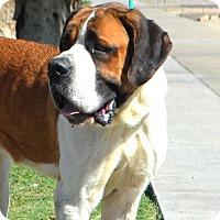 Adopt A Pet :: Jacoby - Goodyear, AZ