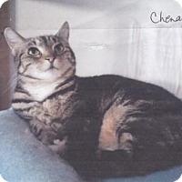 Adopt A Pet :: Chenay - Calimesa, CA