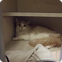 Adopt A Pet :: MIMI - Cheboygan, MI