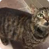 Adopt A Pet :: Mr. Bailey 5062 - Columbus, GA
