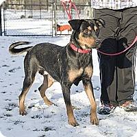 Adopt A Pet :: Sweet Suri - Brooklyn, NY