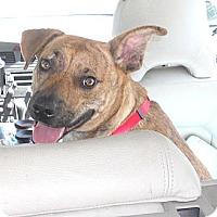 Adopt A Pet :: Frank - Missouri City, TX