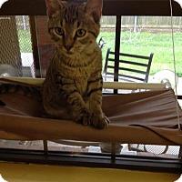 Adopt A Pet :: Hugh - Lake Charles, LA