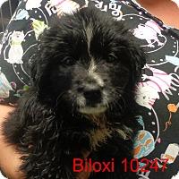 Adopt A Pet :: Biloxi - Greencastle, NC