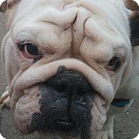 Adopt A Pet :: Kadee - Decatur, IL
