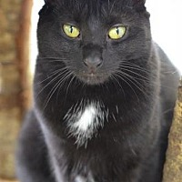 Adopt A Pet :: Girlfriend 150794 - Atlanta, GA