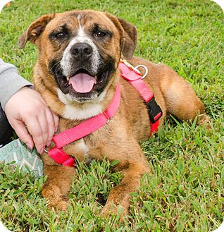 Boxer Mix Dog for adoption in Midlothian, Virginia - Squiggy