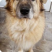 Adopt A Pet :: Sasha - Fennville, MI