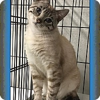 Adopt A Pet :: Calvin - Atco, NJ