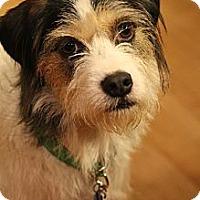 Adopt A Pet :: Hopper - Wytheville, VA