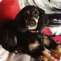 Adopt A Pet :: Ralphie - Rancho Mirage, CA