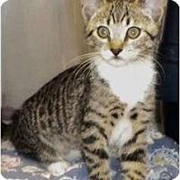 Adopt A Pet :: Beatrice - Encinitas, CA