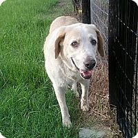 Adopt A Pet :: Hogan - Orange Lake, FL