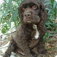 Adopt A Pet :: Chase - Sugarland, TX