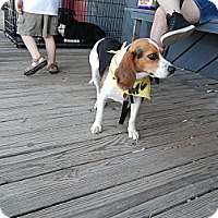 Adopt A Pet :: Lannie - Chilhowie, VA