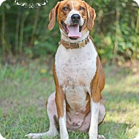 Adopt A Pet :: Cowboy - Fort Valley, GA