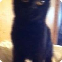 Adopt A Pet :: Jordan - Cocoa, FL